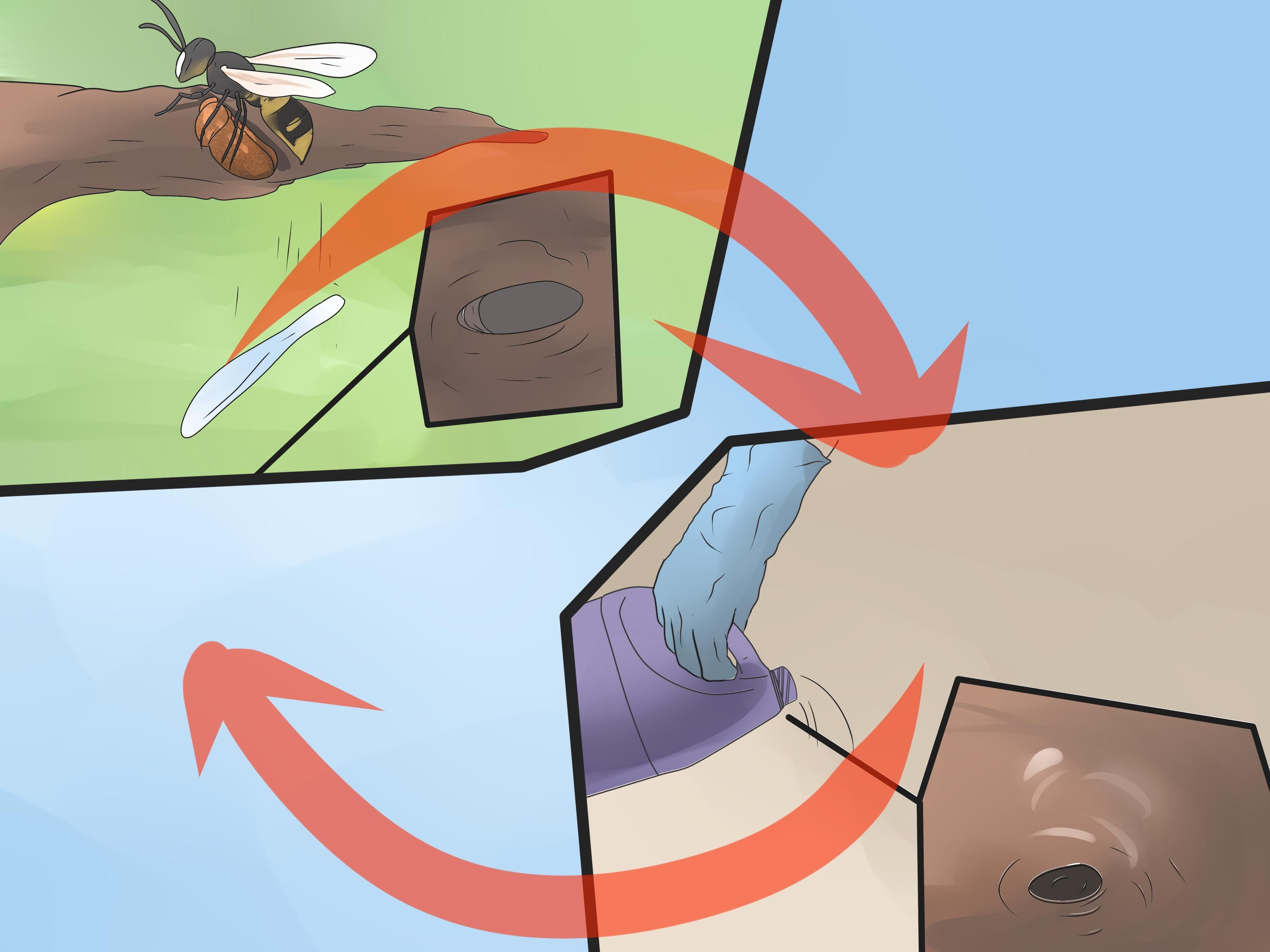 Get rid of ground digger wasps cicada killers from your