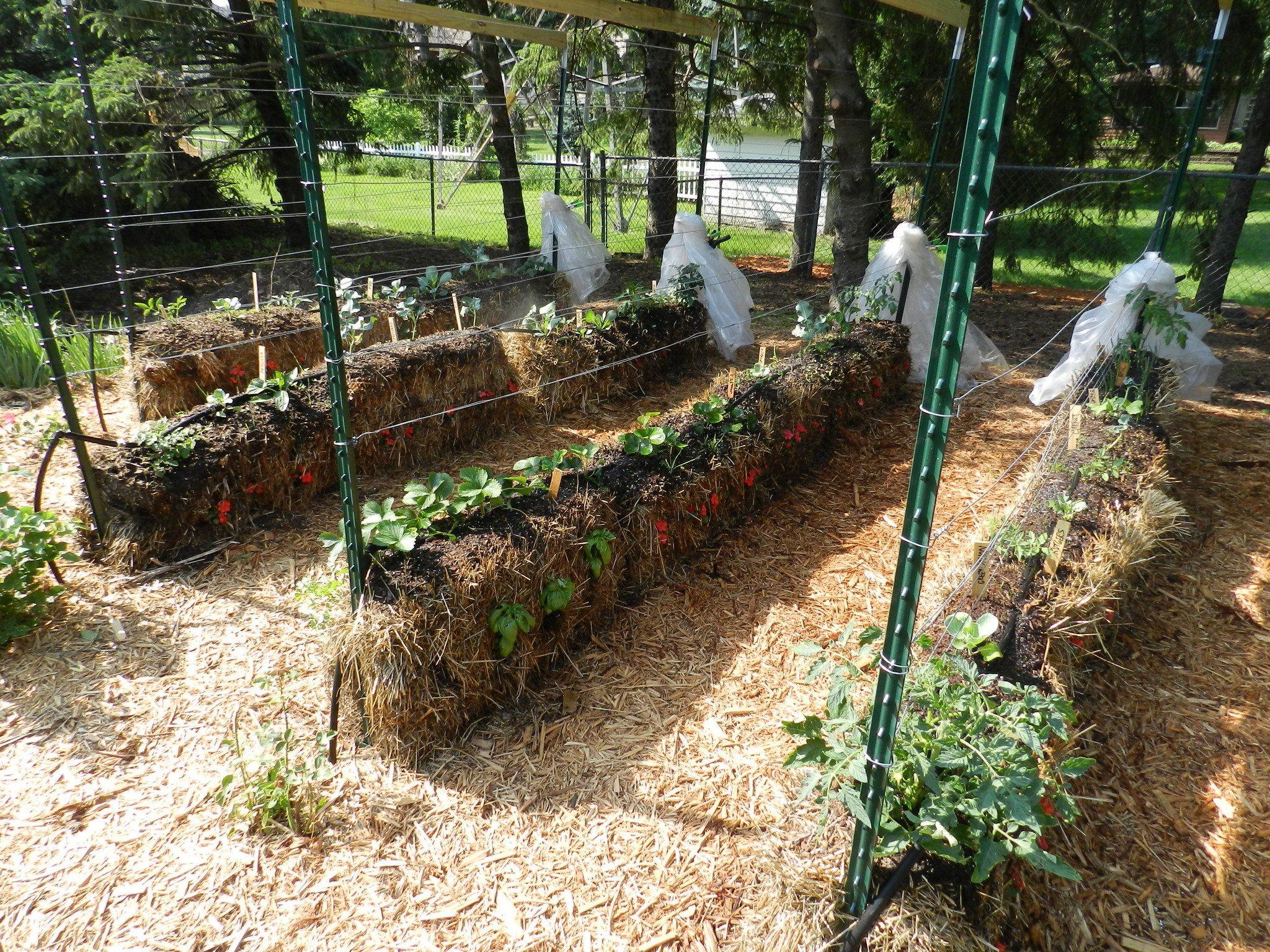 gardening in straw hay bale gardening hay bales and straw bales