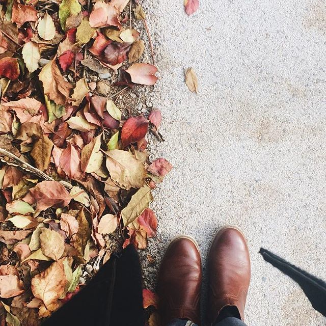 These colors... I can't have enough of them. . . . #autumnalcolours #crunchyleaves #walkingthroughfall