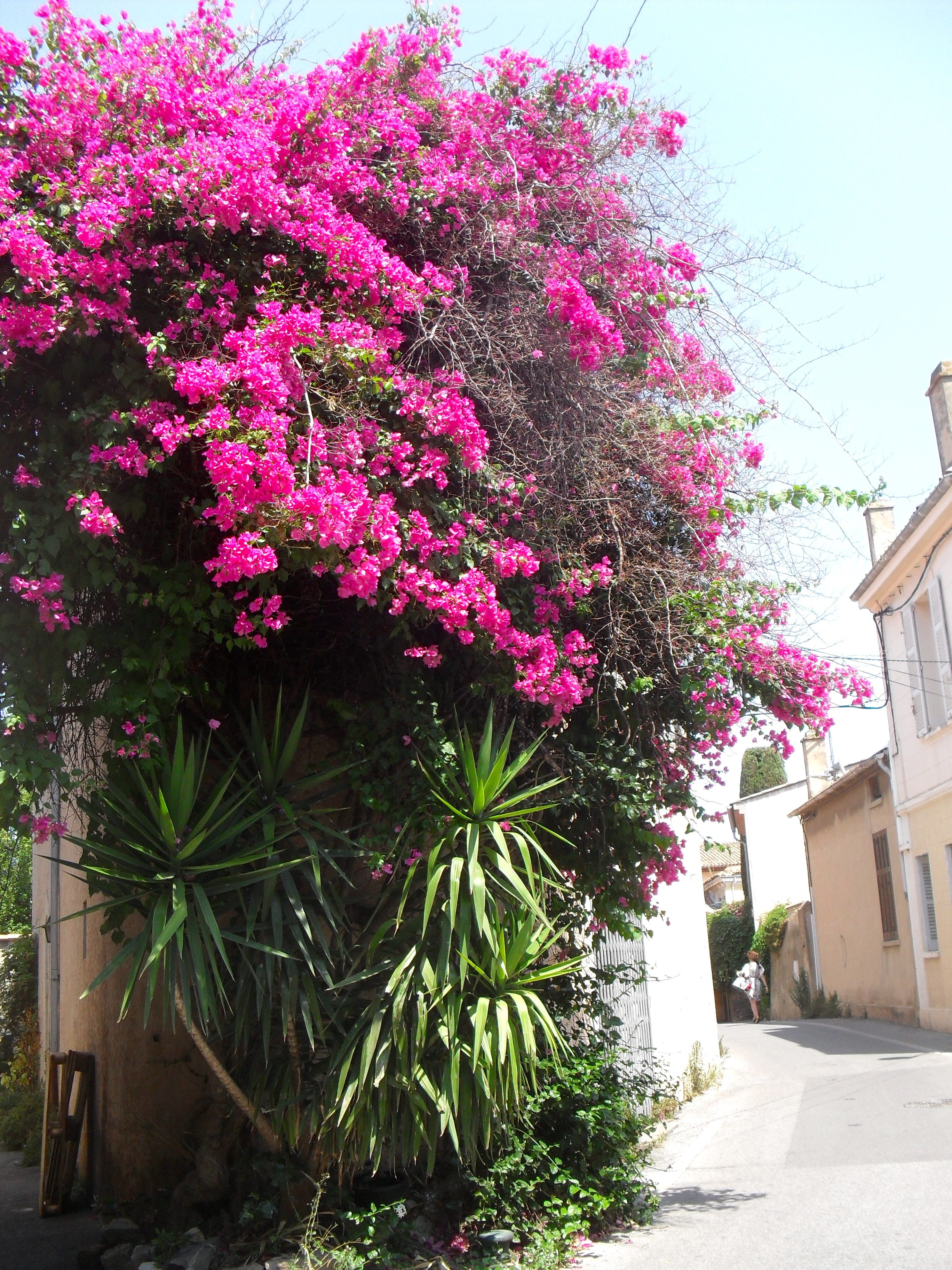 Haus design eingangstor petite rue calme dans sttropez  tür u tor u fenster in