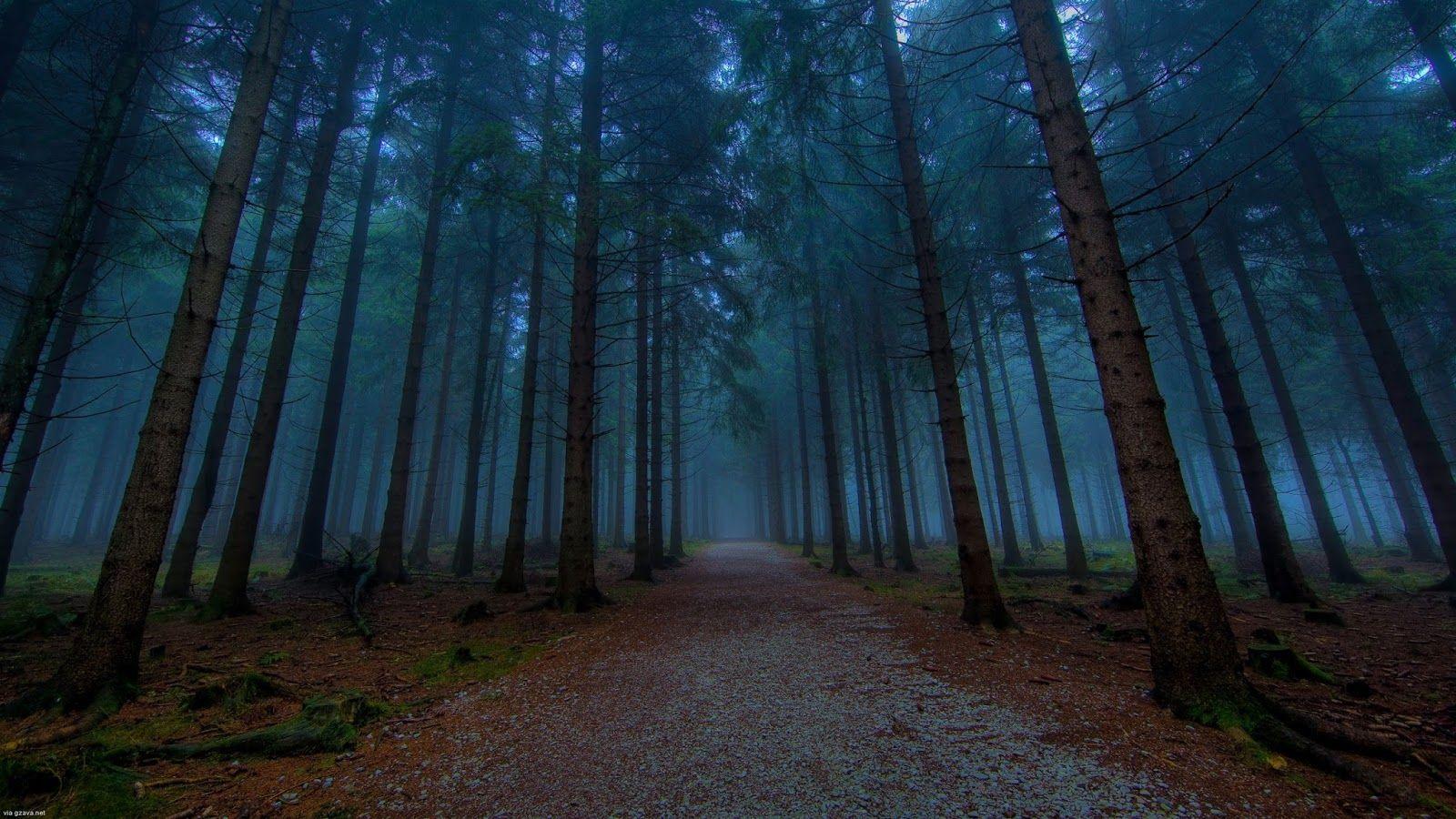 foggy forest wallpaper hd   1600 900 landscape