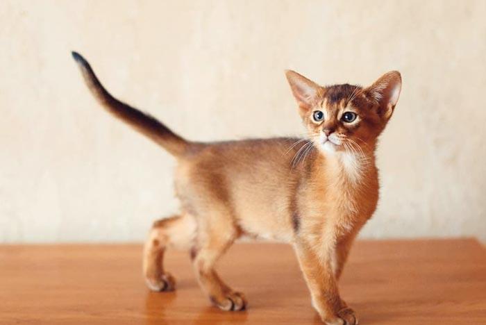 Los 13 Gatos Más Bonitos Del Mundo Con Fotos Feelcats Gatos Bonitos Gato Saludando Gatos