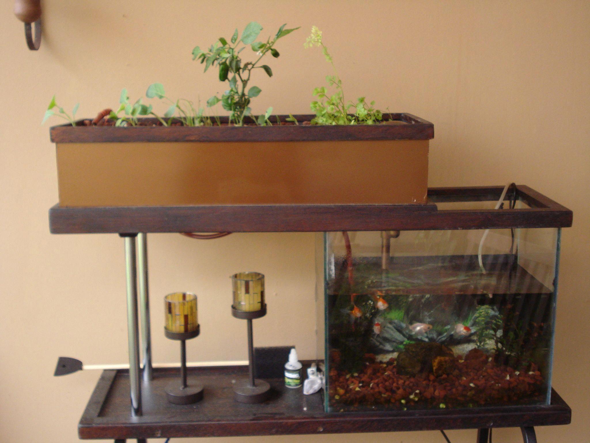 Aquaponics fish tank kit id1587219653 grapecaregrowing