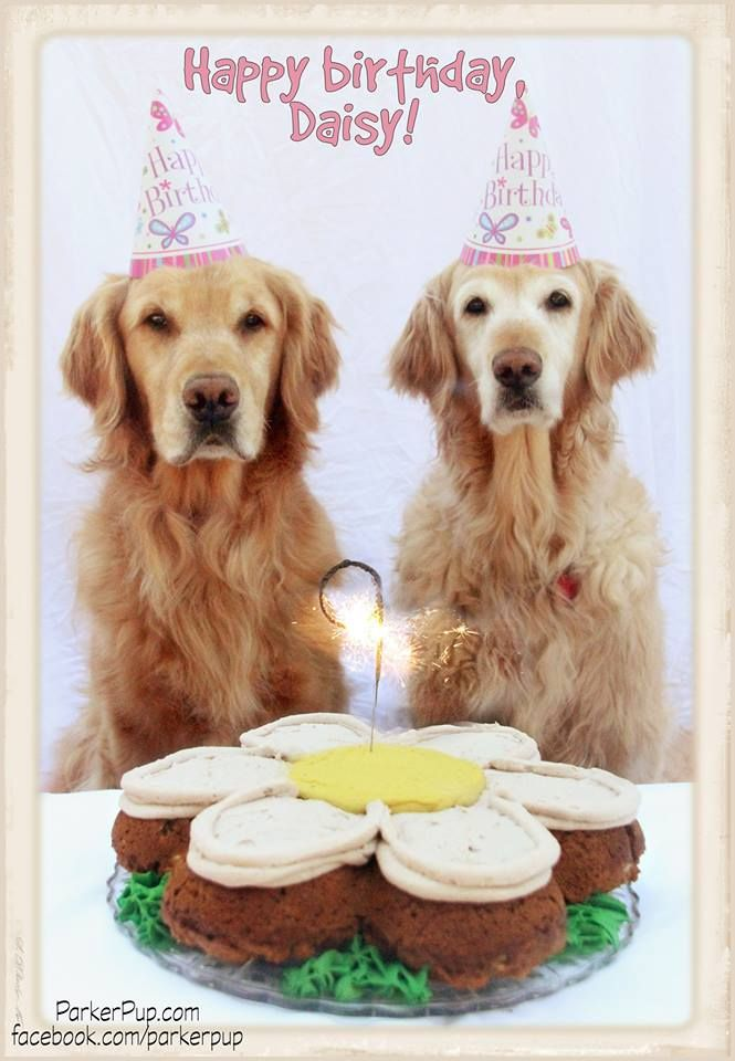 Happy Birthday Daisy With Images Animal Birthday Sweet Pic