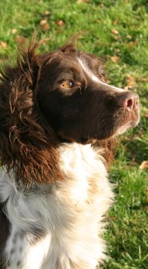 Mordor Gundogs International Training Breeding Perthshire Scotland Uk