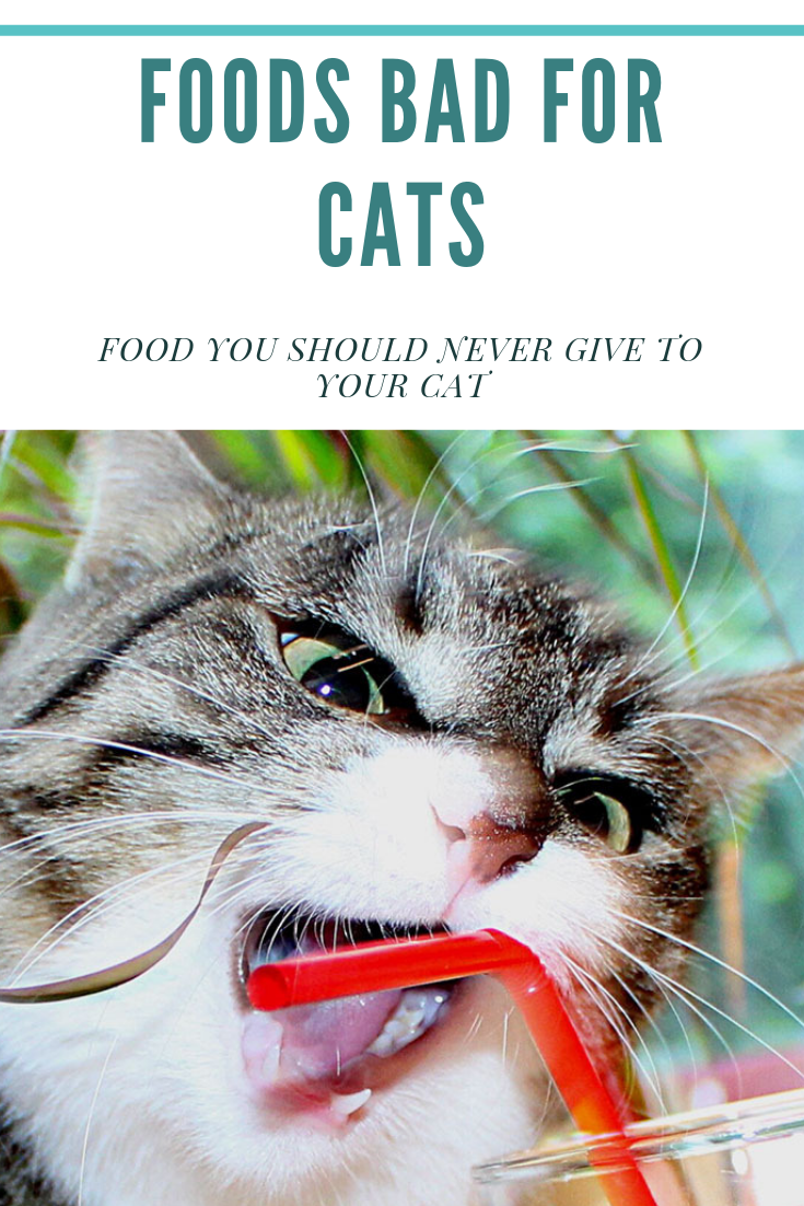 Foods Bad For Cats Food You Should Never Give To Your Cat With