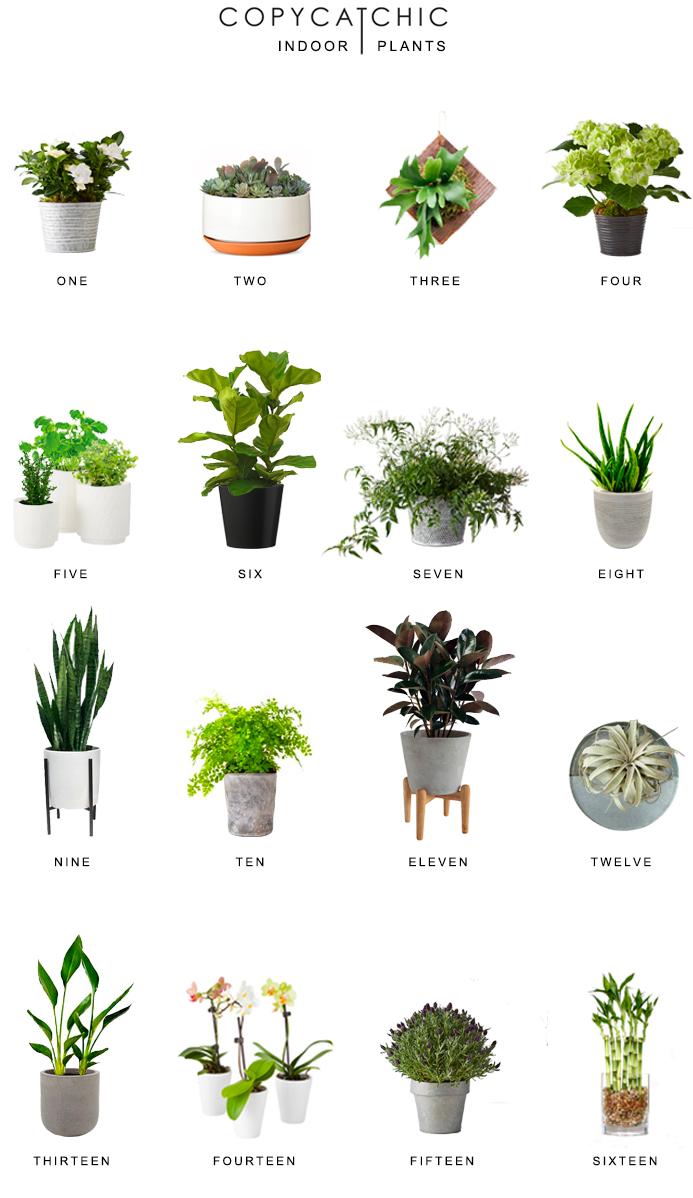 Home Trends Indoor Plants Copycatchic Interior Design Living Room Warm Indoor Plants Plant Decor