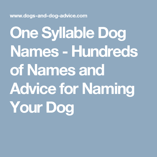One Syllable Dog Names Hundreds Of Names And Advice For Naming