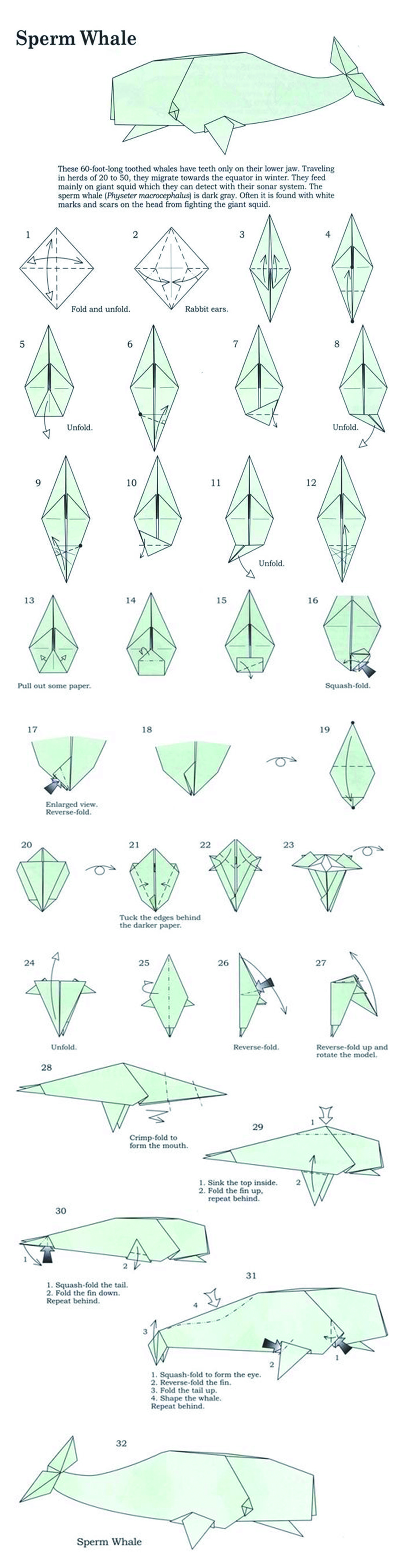 hight resolution of sperm whale origami diy origami whale origami origami paper rh pinterest com origami fox diagram origami fox diagram