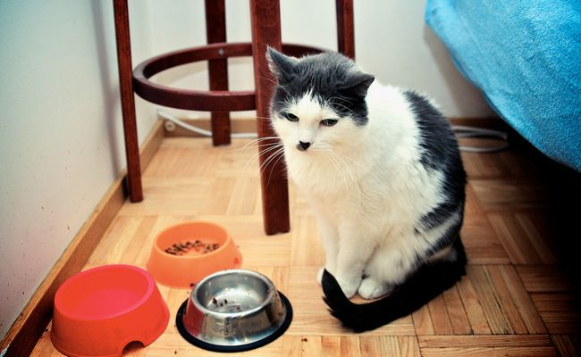 Pet Food Pantries Support Low Income People With Pets Food Animals Pets Animal Stories