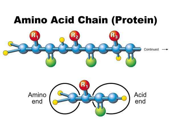The monomers of protein are amino acids Macromolecules Pinterest - amino acid chart