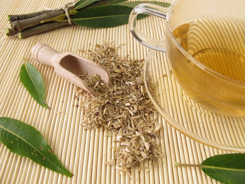 How To Make Willow Bark Tea + 13 Other Uses For Nature's Aspirin ...