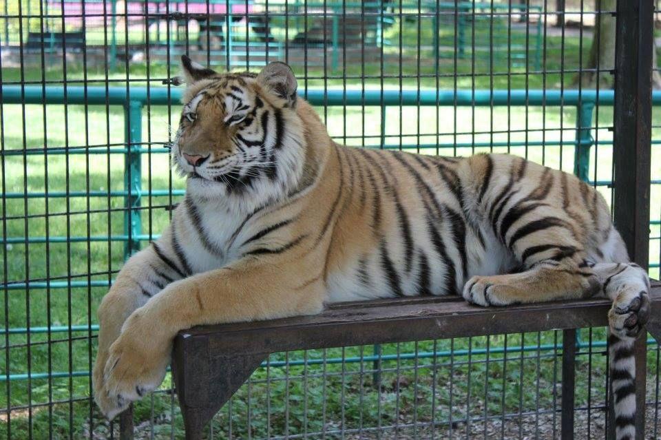 15++ Wild animal safari missouri images