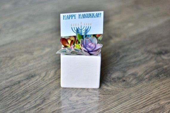 Hanukkah Succulent Gift For Office Chanukah Friend Birthday Succulents Teacher Thank You B