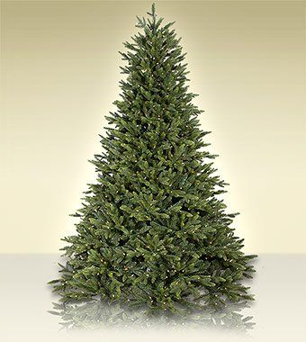 75 ft treetime flagstaff fir artificial christmas tree with clear lights see this great product