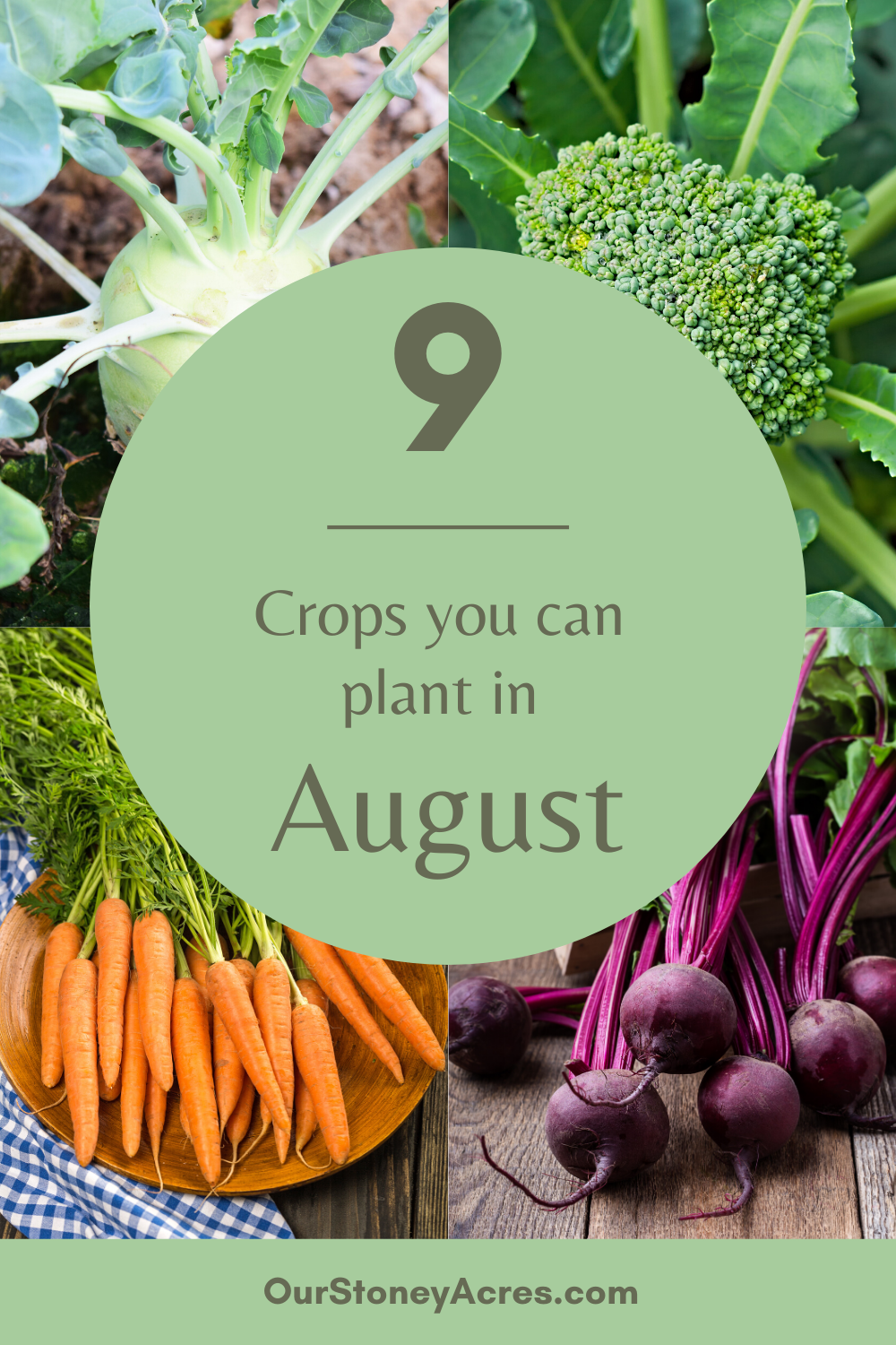 9 Crops You Can Plant In August For Fall And Winter Harvest Our Stoney Acres Fall Garden Vegetables Home Vegetable Garden Fall Vegetables