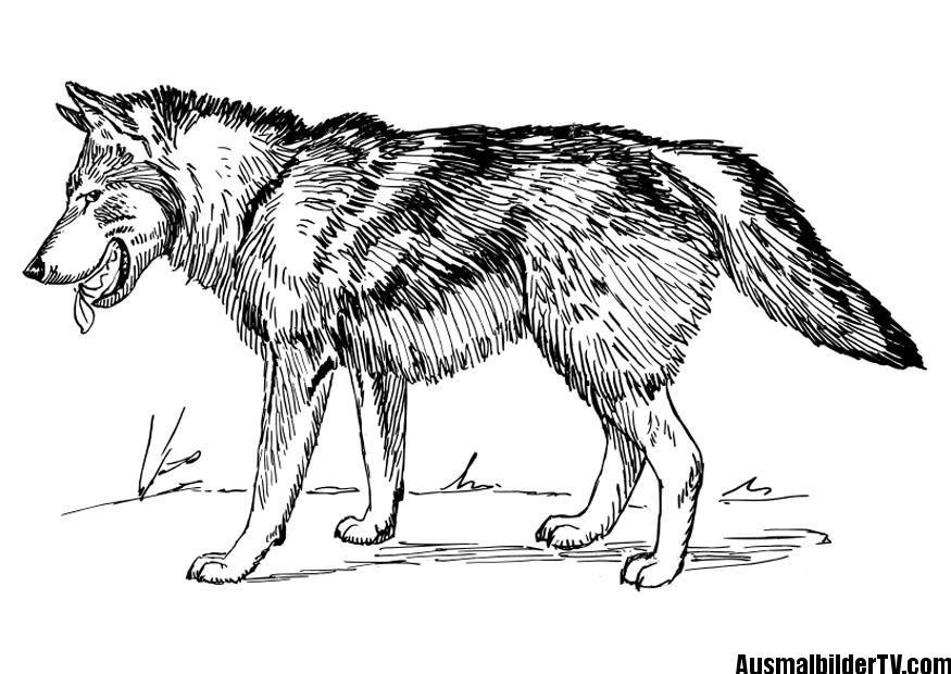 malvorlagen wolf   ausmalbilder   Pinterest   Wolf, Ausbilder und ...