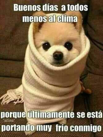 Pin De Imelda En Buenas Noches Animales Bonitos Animales Bebes Buenos Dias Perros