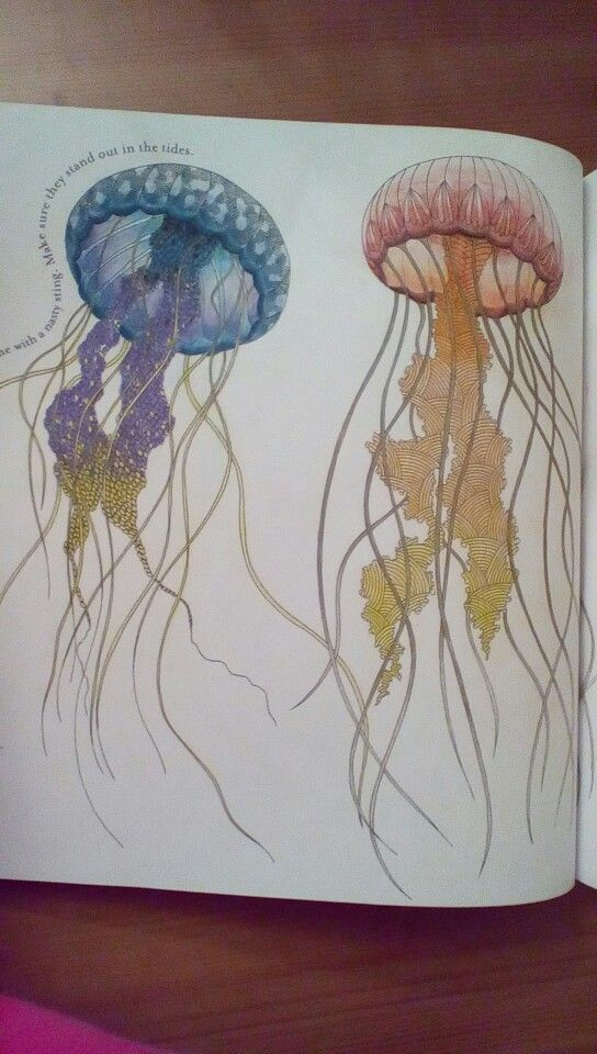 Millie Marottas Animal Kingdom Jellyfish