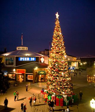 America S Tallest Christmas Trees Christmas In San Francisco Pier 39 San Francisco Christmas Tree Lighting