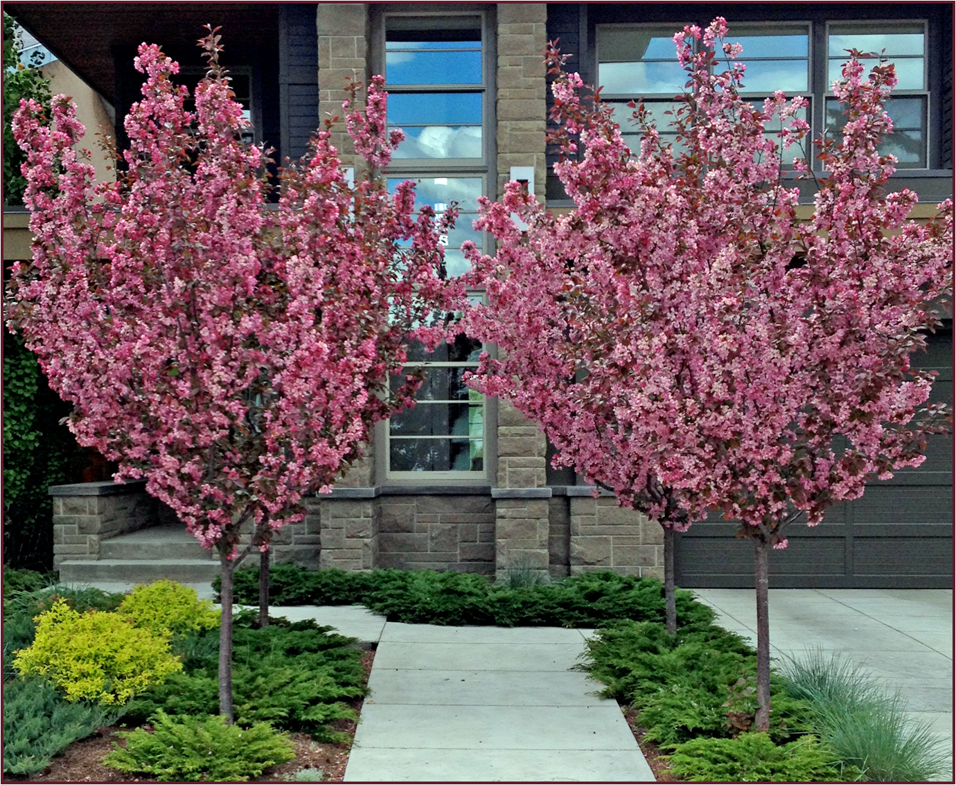 Ornamental crabapple trees have a beautiful vase shape for Landscaping ornamental plants