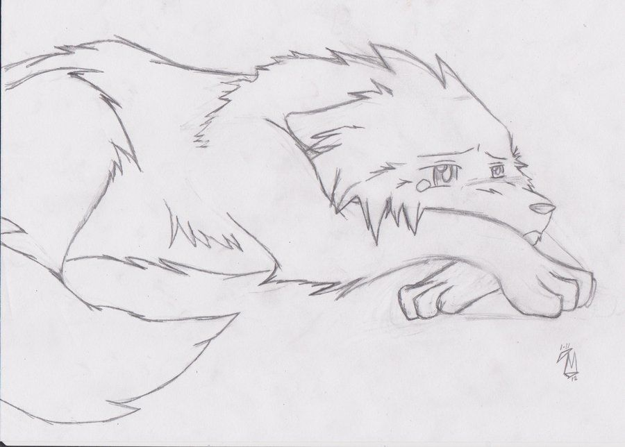 Wonderful Sad Wolf Drawings Anime Sad Wolf Drawing Worried