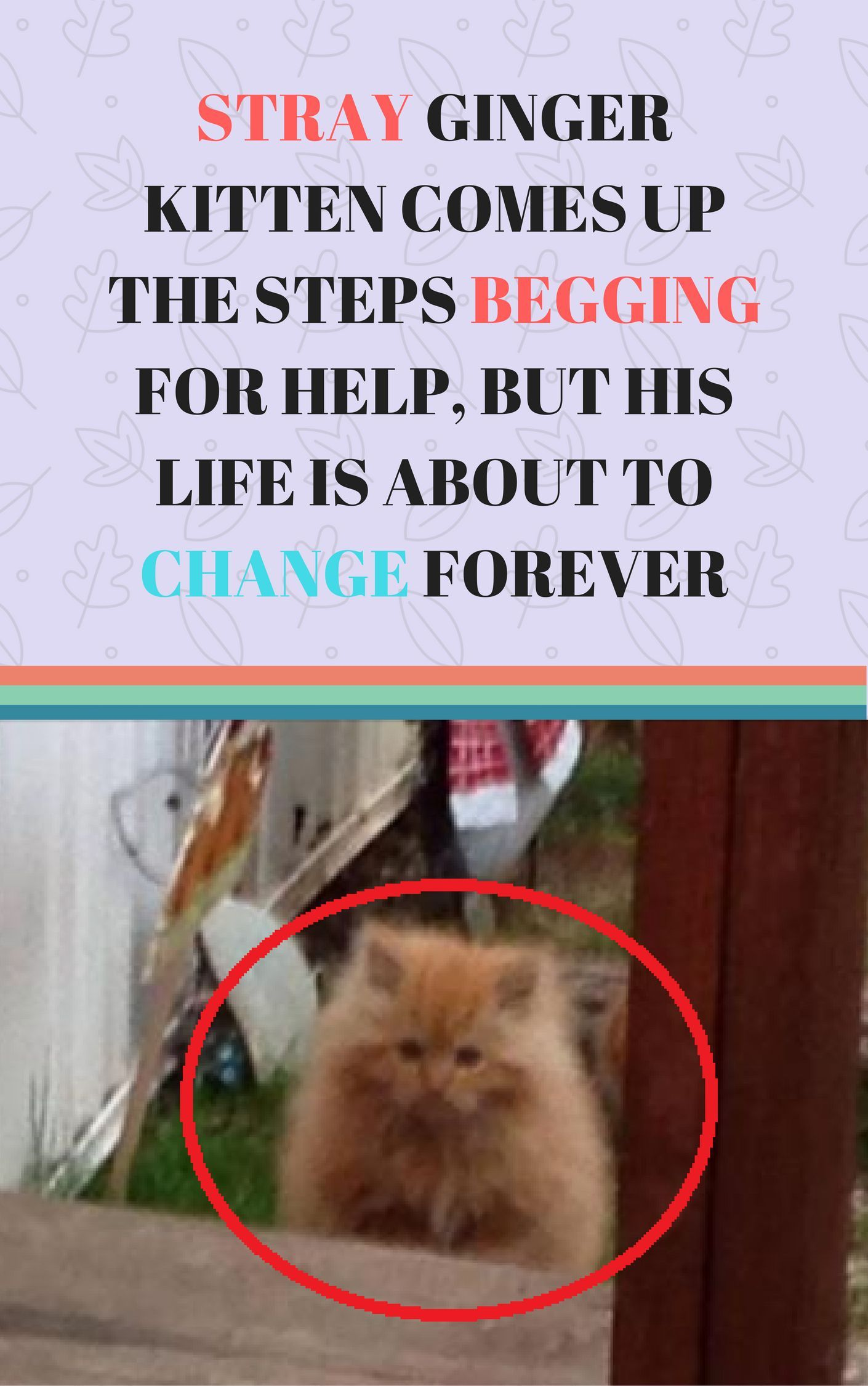 A Heartwarming Rescue Story Follow Us For More Cats And Kittens Cute Cats Animals And Pets Rescue Stories Cats Ki Ginger Kitten Kittens Cat Has Fleas
