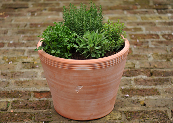 Five of our favourite terracotta planters #gardening #patio #balcony