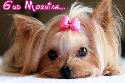 Good Morning Puppy Morning Daily Happenings Pinte