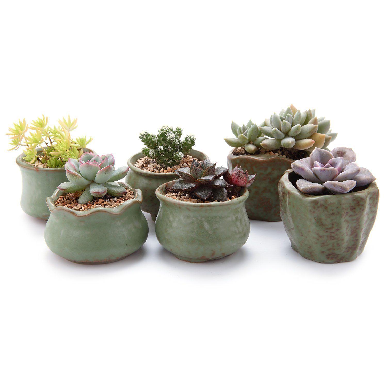T4u 6 5 7 Cm Spring Serial Sucuulent Kaktus Pflanztöpfe Blumentöpfe