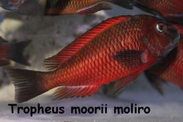 Stockliste Tanganjika Oase Zierfische Fische Afrika