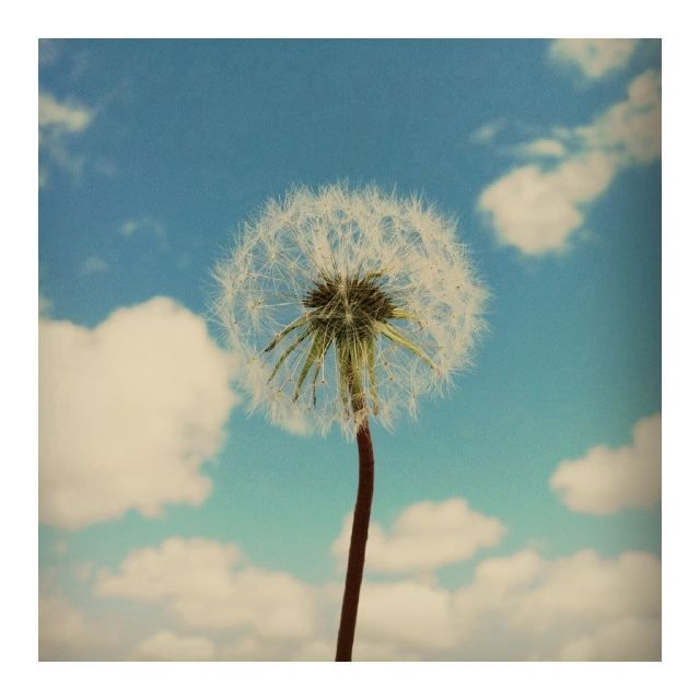 From Twitter user @josevilla  Excited to shoot today's Montana wedding along side @joythigpen @nancyvilla @TEAMHairMakeup, puffy clouds hang in there! http://yfrog.com/kfjjbhj      * Reply Tweet Favorite  Twitter