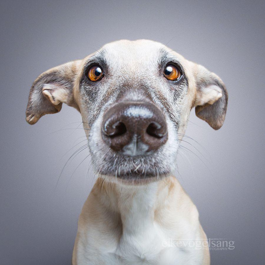 Dogsonality - Naïvety by Elke Vogelsang / 500px