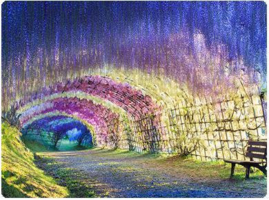 九州 河內藤園