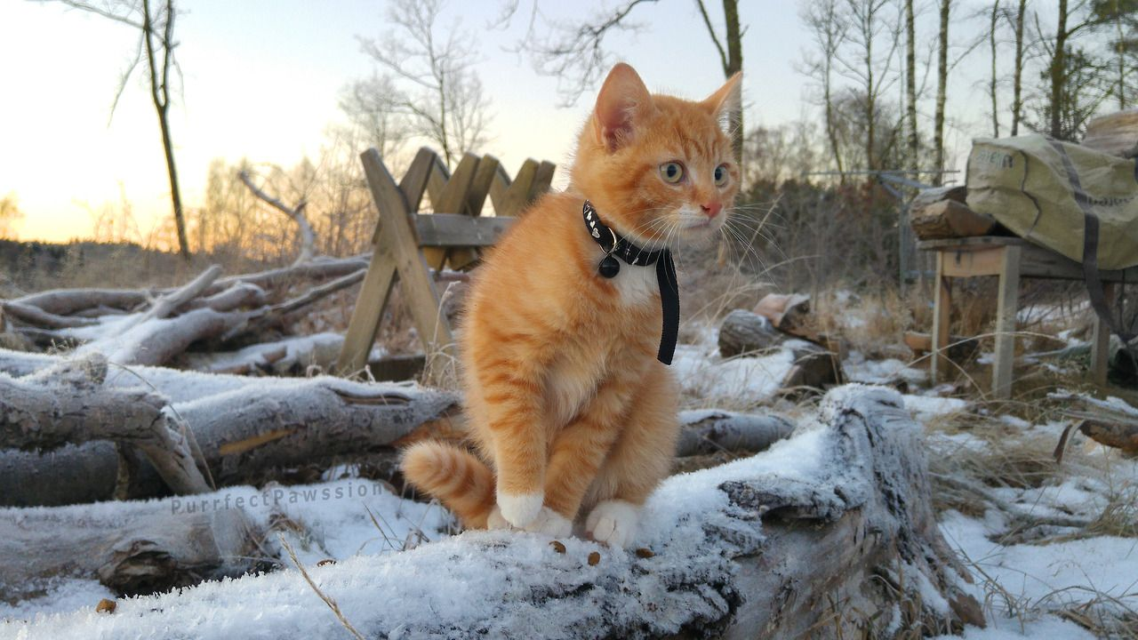 Mostlycatsmostly Cute Animals Cute Cats Cats