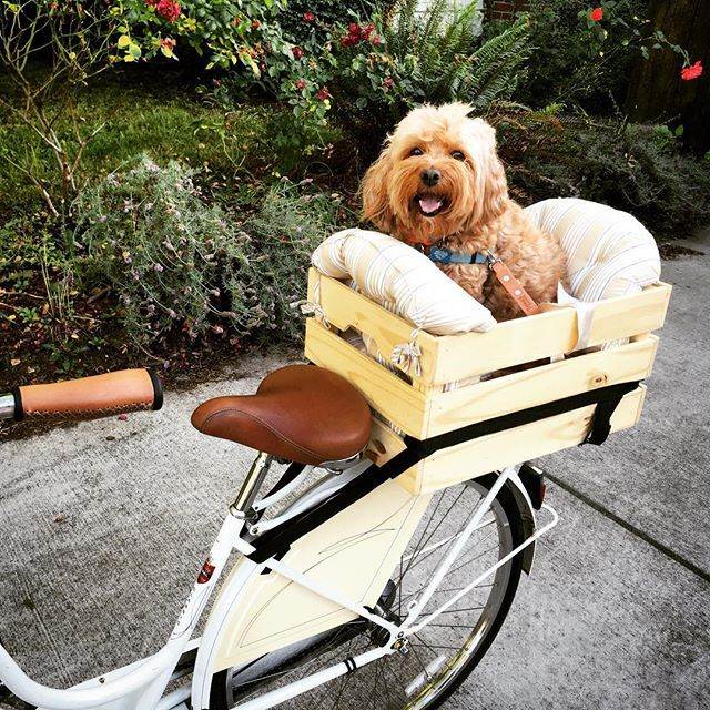 Instagram Analytics Dog Bike Basket Dog Bike Carrier Biking