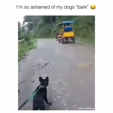 Dog's Bark Is Too Funny To Keep From Laughing!