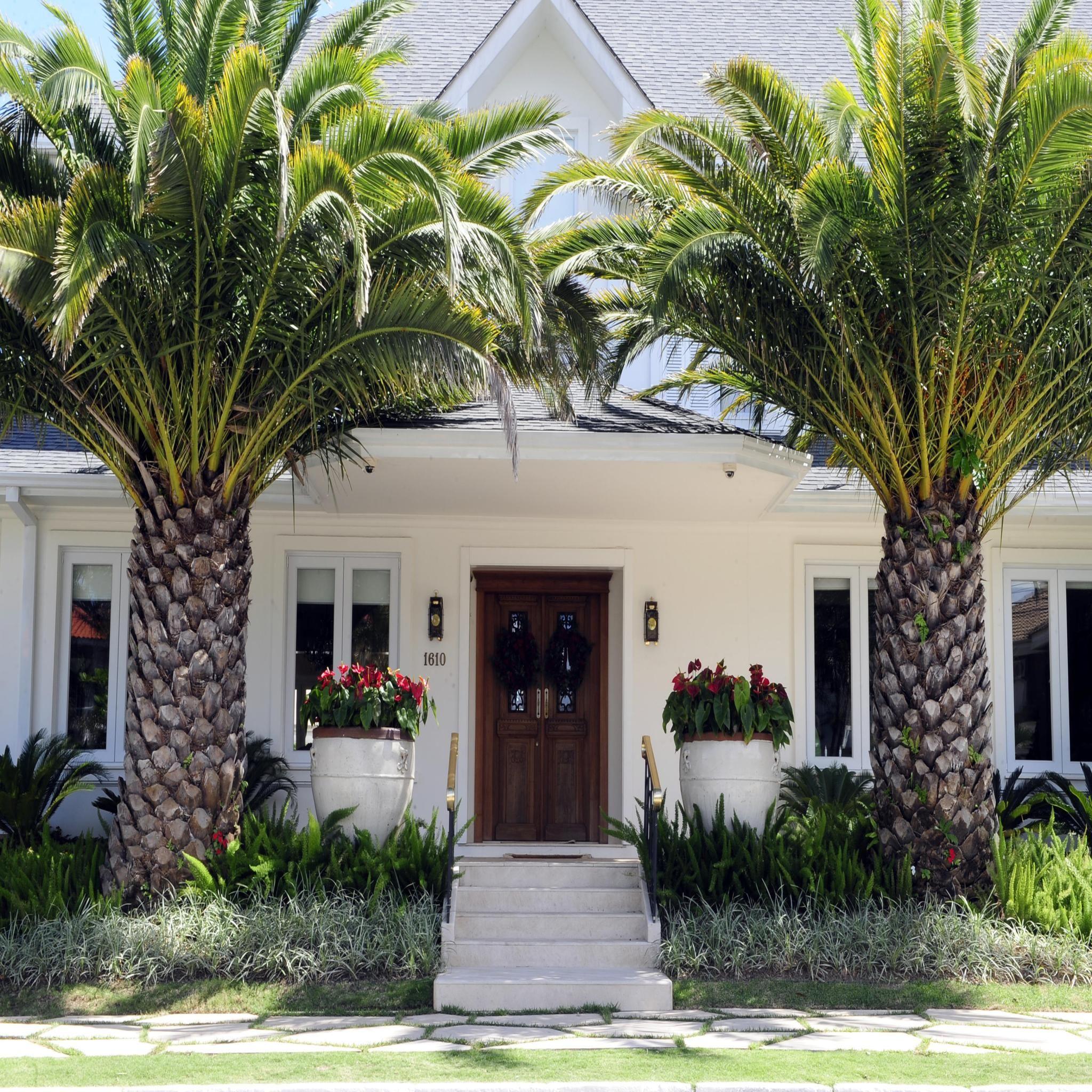 Casas Mansiones Rosario Conteras: Pin De JUAN MANUEL Barba Negra En Palms In Garden