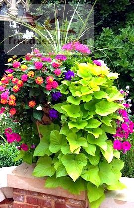 5 Easy And Simple Tips For Garden Ideas Garden Containers Container Gardening Flowers Plants