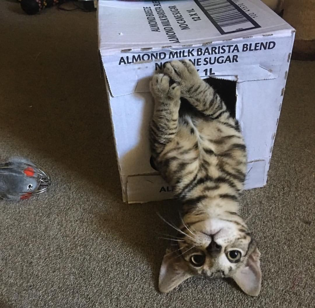 Love Cute Cats Con Immagini Gattini Gatti Animali