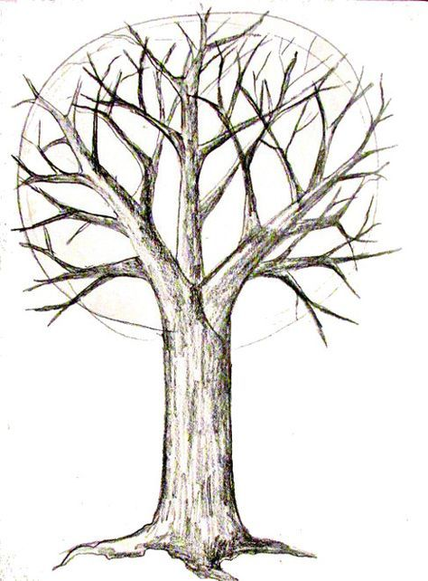 How To Draw A Tree Doodles Pinterest Drawings Trees Drawing