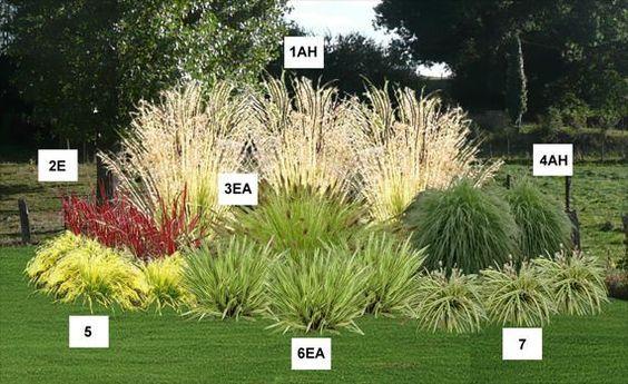 Massif d angle de graminées   pépinière, plantes, jardinerie ...