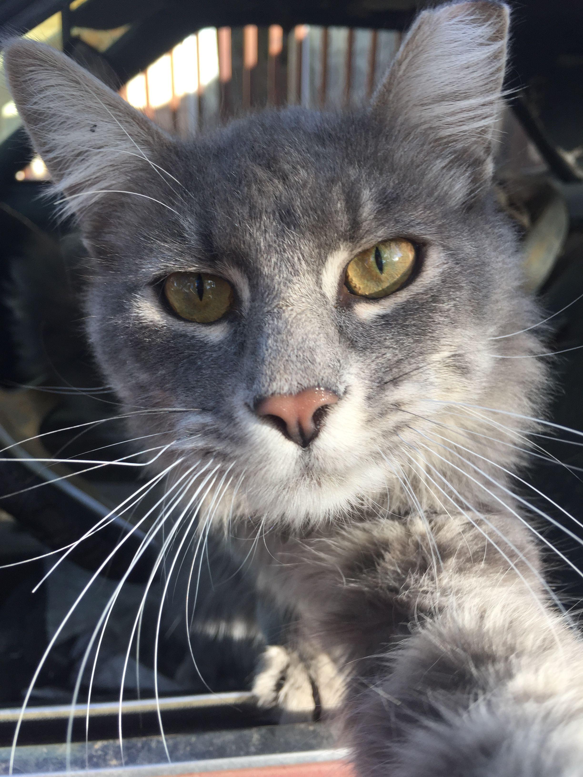 Selfie Kitty nudes (98 foto and video), Tits, Sideboobs, Twitter, legs 2018
