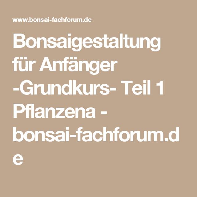 bonsaigestaltung f r anf nger grundkurs teil 1 pflanzena bonsai kays garten. Black Bedroom Furniture Sets. Home Design Ideas