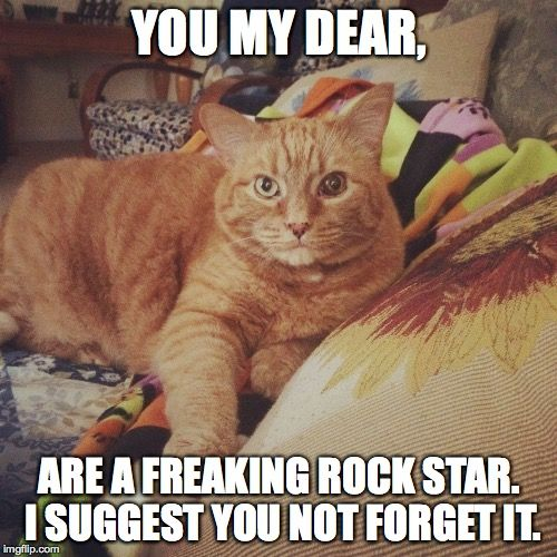 You Are A Rock Star Cat Memes Funny Cat Memes Work Memes