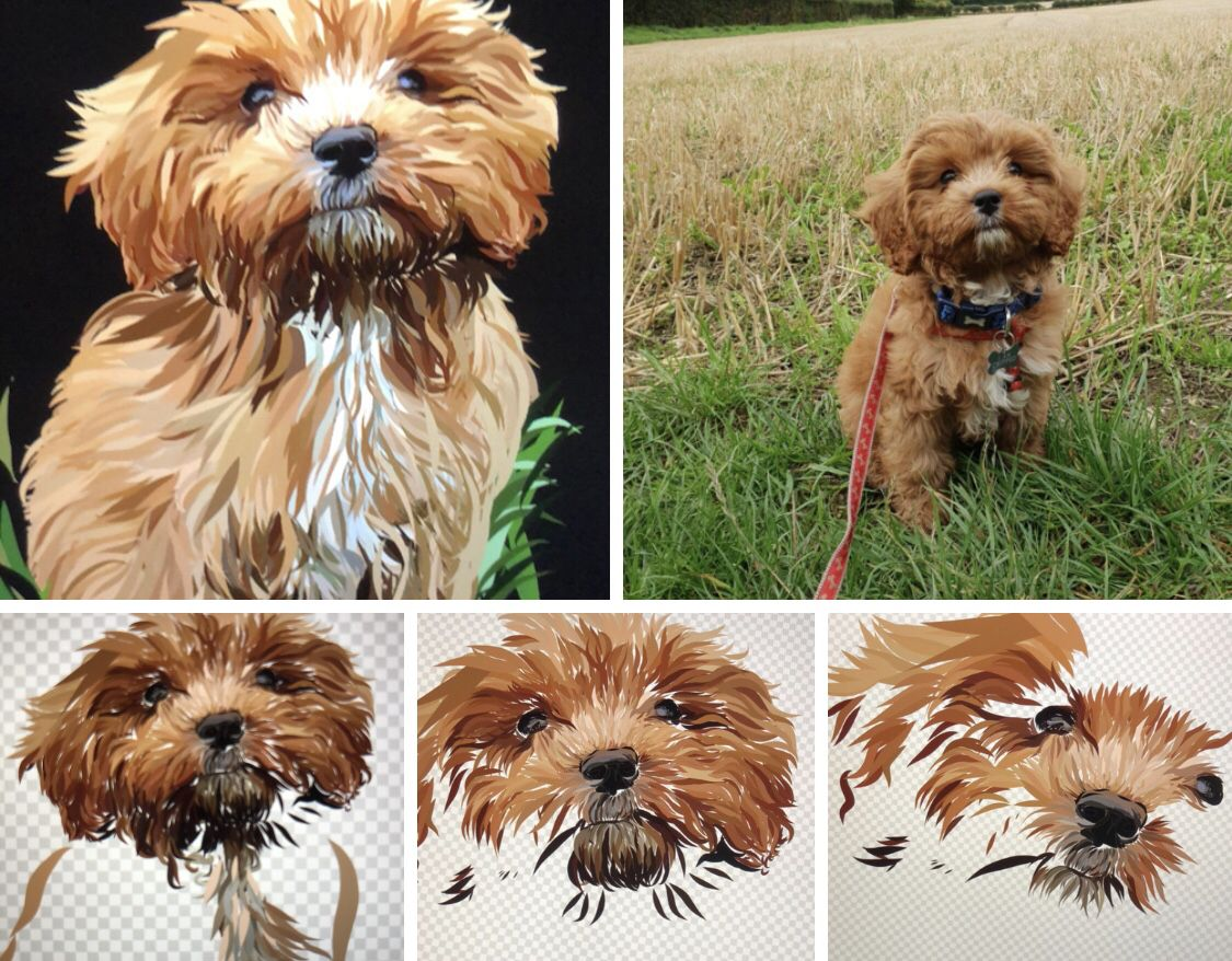 This is Obi the cavapoo. This shows my step by step
