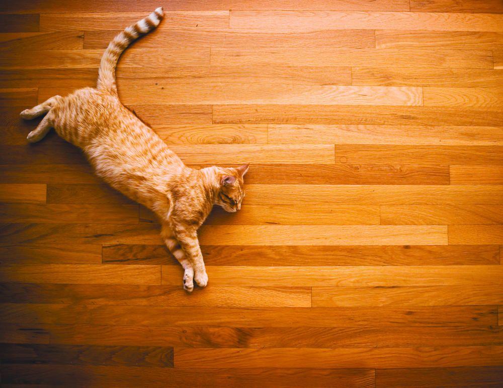 Petdecorator Petfriendly Flooring Pet Decorator Cat
