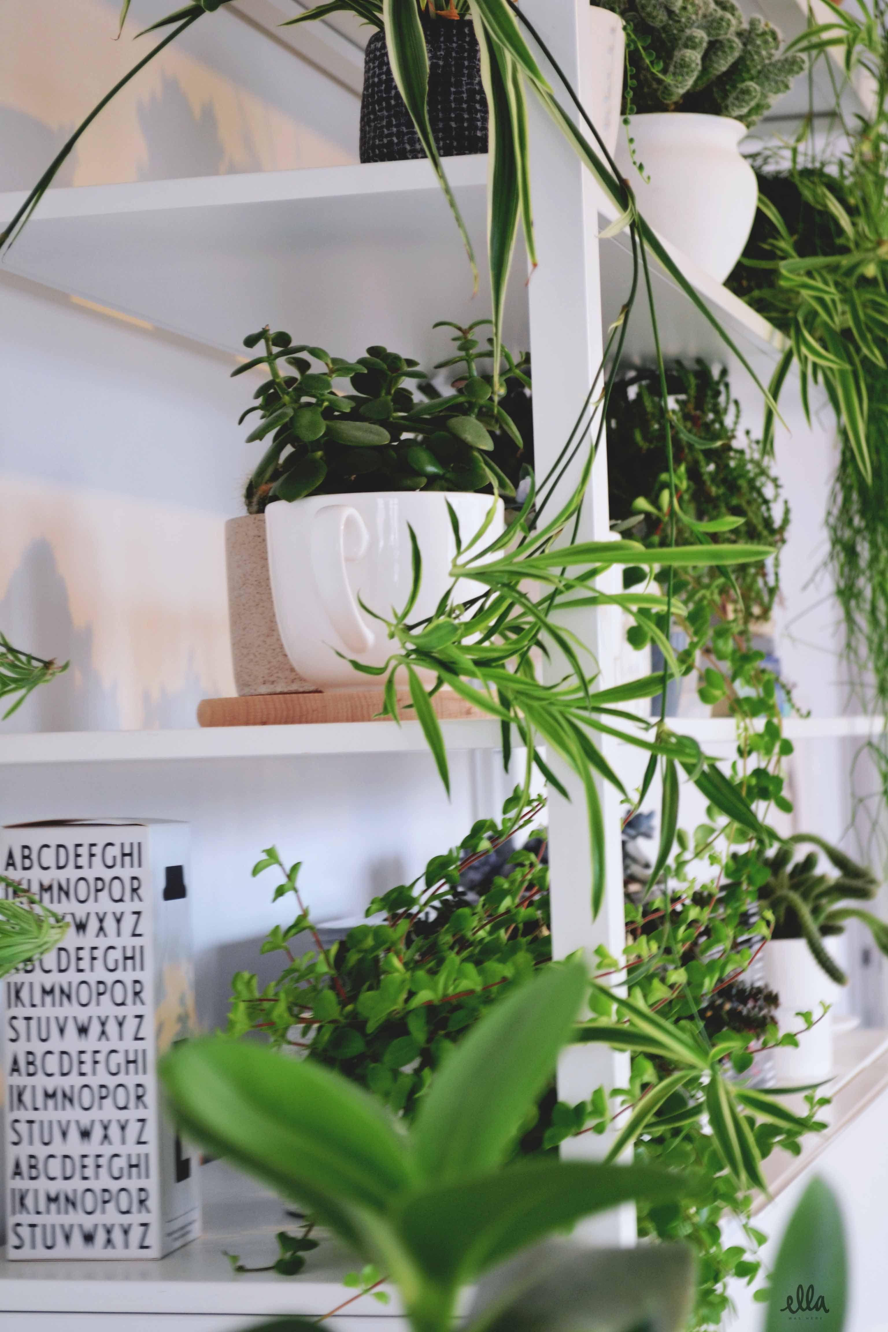 Plants In White Ikea Cupboard I Where My Plant Pots Ella Was Here