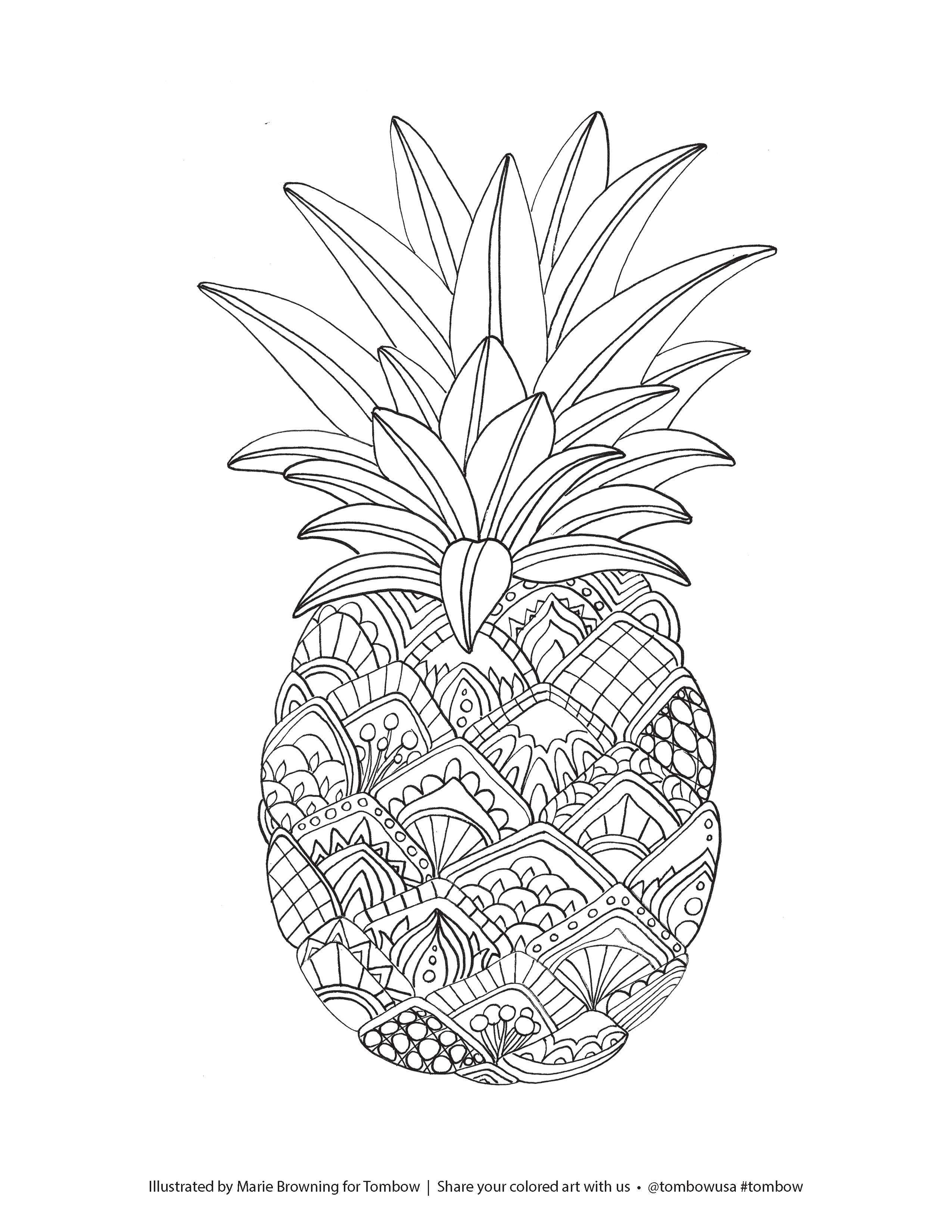 Zentangle Pineapple Coloring Page illustrated by Marie