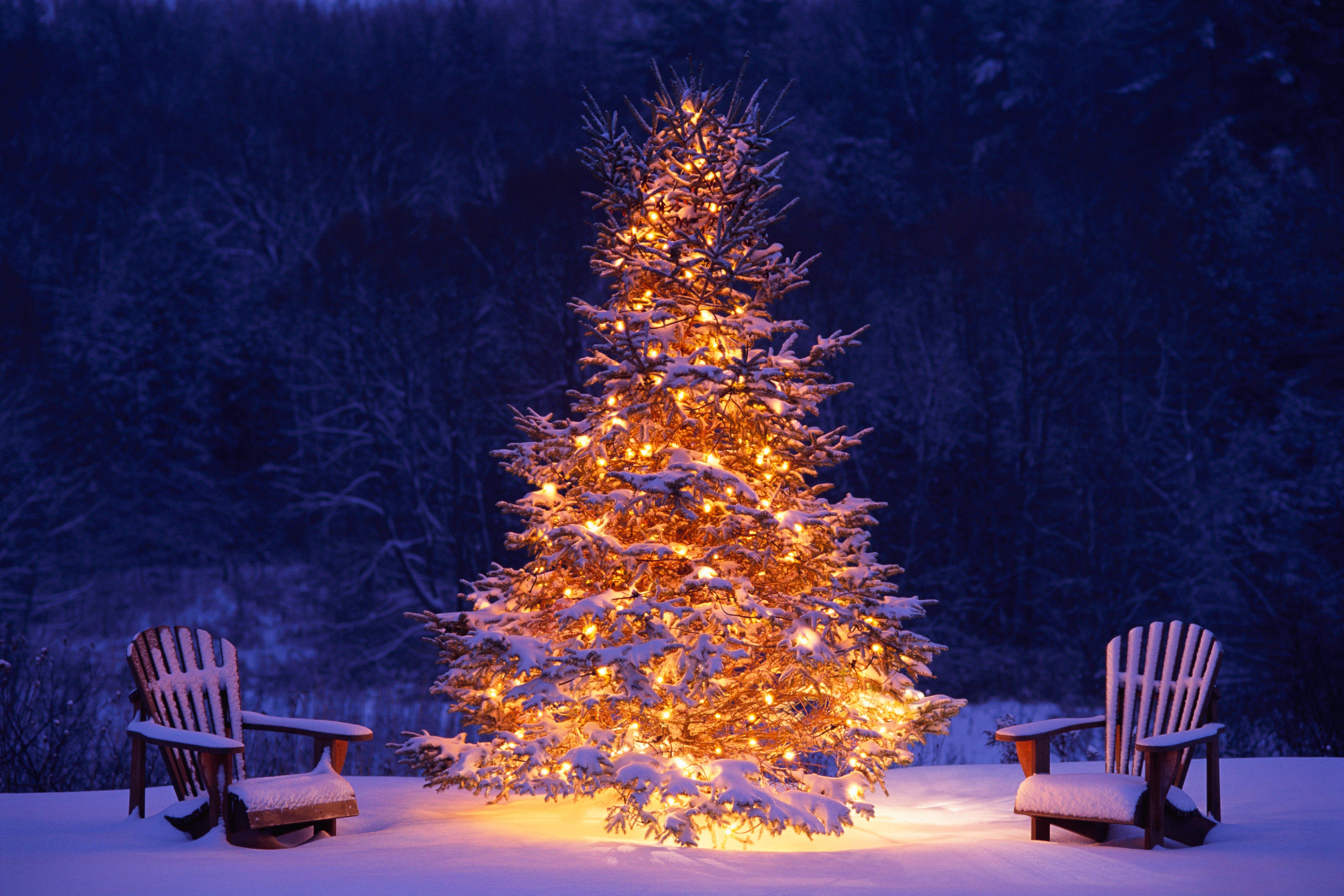 Winter Wonderland Snowy Winter Scenes Christmas Trees Christmas Desktop Christmas Tree Wallpaper Christmas Lights Wallpaper